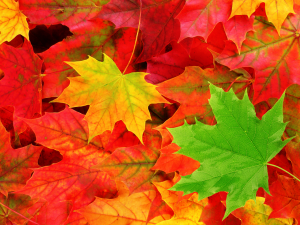 Autumn_Leaves_Wallpaper